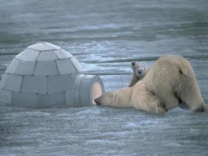l'igloo : une conception bioclimatique parfaite